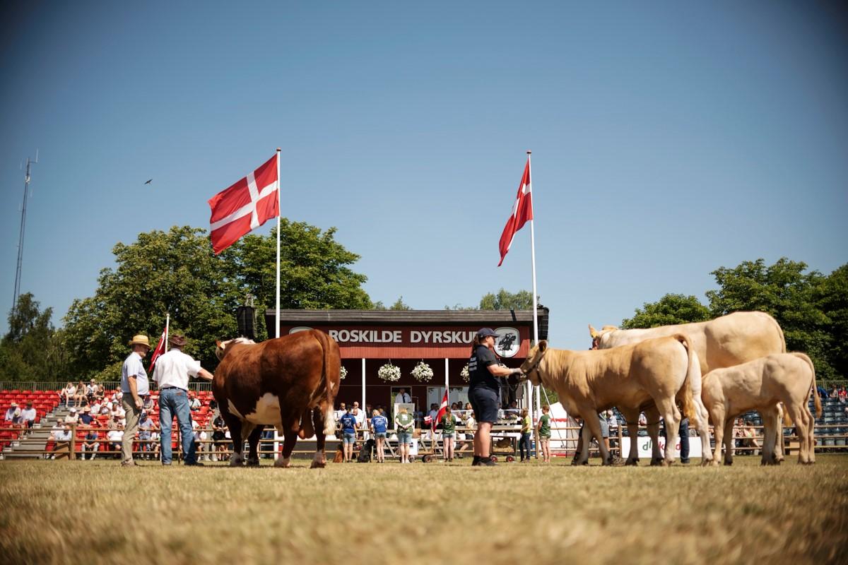 Om Roskilde Dyrskue