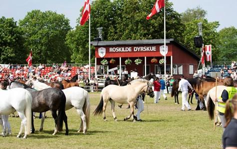 Roskilde Dyrskue Danmarks Storste Dyrskue